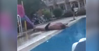 Белорус хотел эффектно прыгнуть в бассейн, но рухнул на бортик