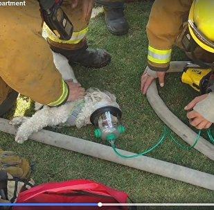 Пажарныя вынеслі сабаку з палаючага дома і адкачалі кіслароднай маскай