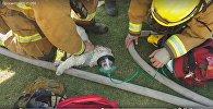 Пожарные вынесли пса из горящего дома и откачали кислородной маской