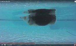 Грацыёзны заплыў коргі ў басейне за дзень паглядзелі 170 тыс. чалавек