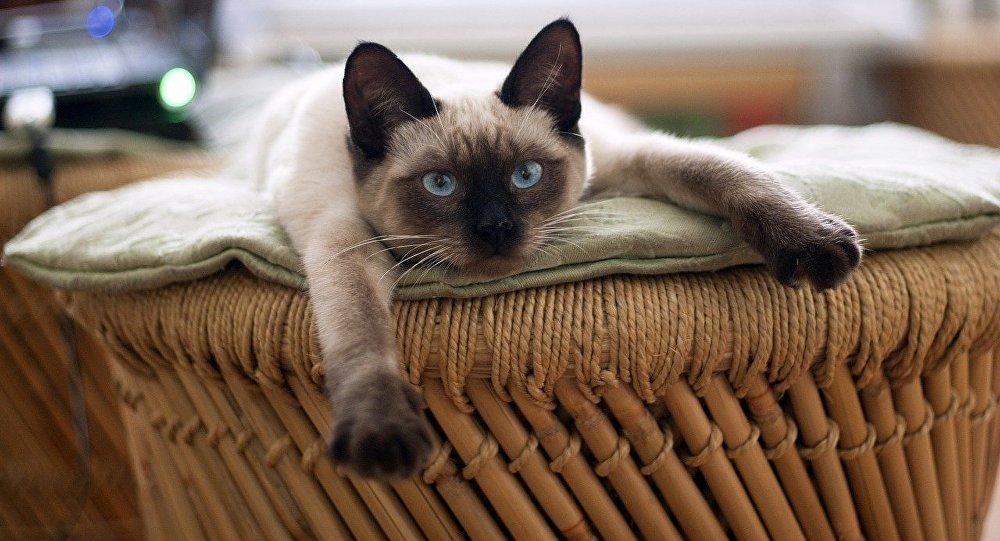 Что означает слово котах