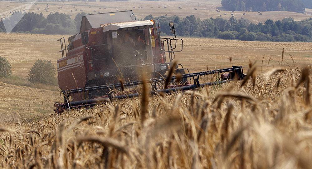Уборка урожая зерновых, архивное фото