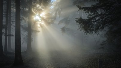 Лес, архивное фото