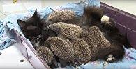 Кошка ў Прымор'і ўсынавіла трох важанятак