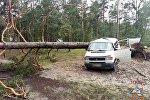 Дерево упало на микроавтобус