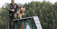 Белорусский кинолог с собакой на полосе препятствий