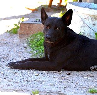 Собаки терроризируют жителей деревни в Воложинском районе