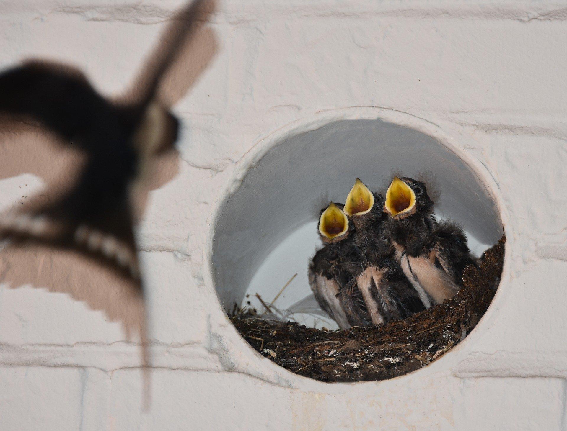Ласточкино гнездо под крышей дома