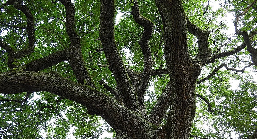 Дерево, архивное фото