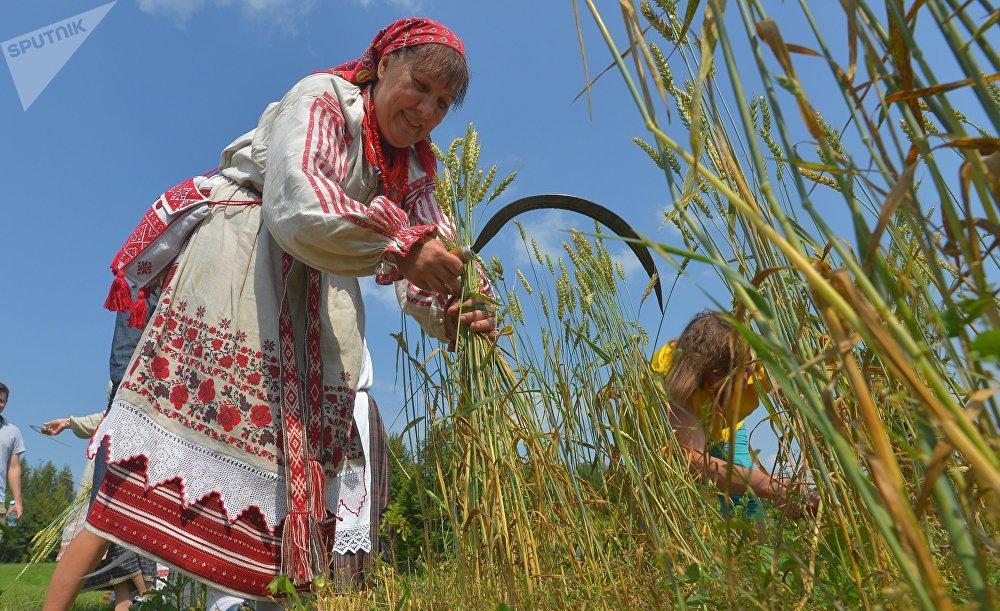 После того, как жито убрали серпами, его собирали в снопы.