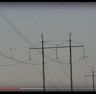 Энергетики показали, кто ежегодно атакует опоры ЛЭП в августе
