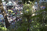 Место падения дерева на Мадейре