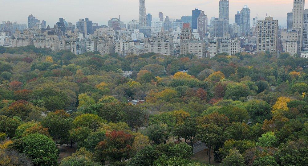 ВНью-Йорке дерево рухнуло намать стремя детьми