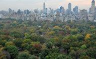 Вид на Центральный парк в Нью-Йорке