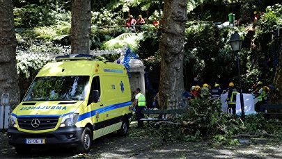 Более 10 человек погибли при падении дерева на Мадейре