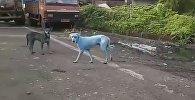 Видео с синими собаками в Мумбаи попало в сеть