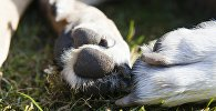 Лапы собаки, архивное фото