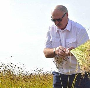 Александр Лукашенко во время посещения предприятия Устье