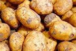 Картофель, архивное фото