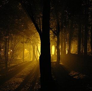 Ночной лес, архивное фото