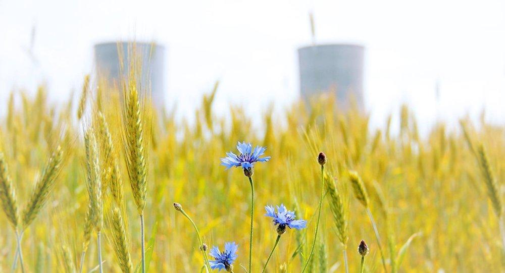 Корпус реактора для 2-го энергоблока привезут наБелАЭС всередине сентября