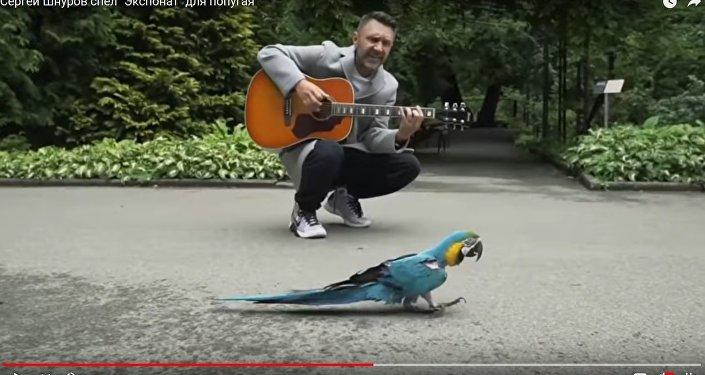 Сергей Шнуров спел для попугая, впавшего в депрессию