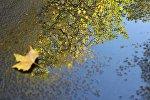 Отражение дерева в дождевой луже, архивное фото