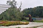 Поваленное дерево, архивное фото