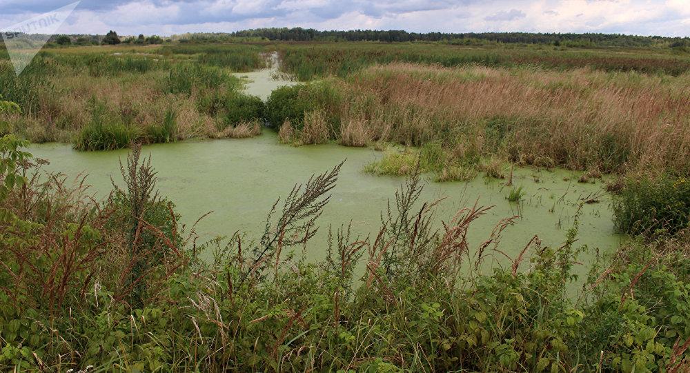 Лет 10 назад здесь на месторождении Святое добывали торф, теперь здесь стоит вода