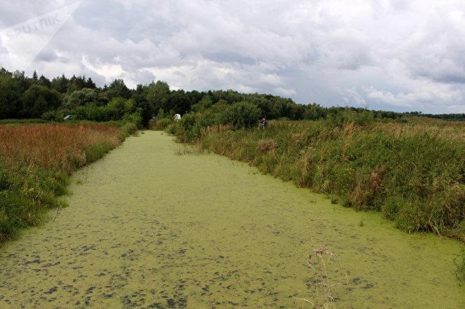 Глубокие канавы появились после добычи торфа, они исчезнут только через много лет