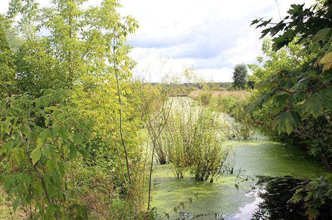 Сейчас территория реанимированного болота – это череда возвышенностей и заполненных водой канав и каналов