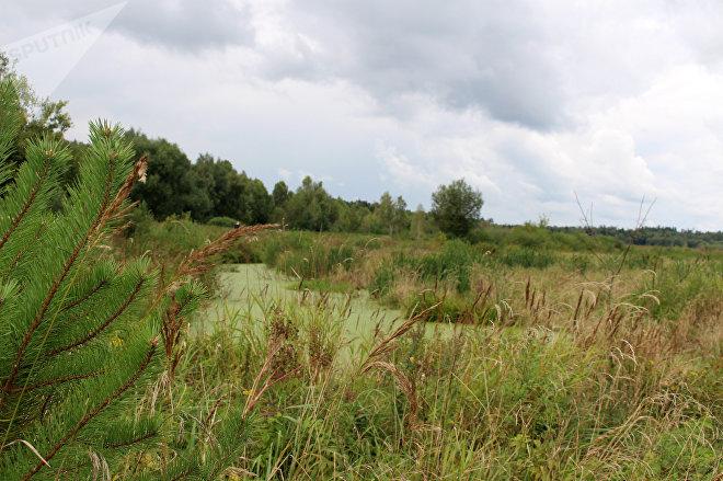 Раньше здесь было заросшее сорняками поле, но когда вода поднялась, начал активно расти тростник