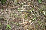 Череп и кости нашли грибники в Пуховичском районе
