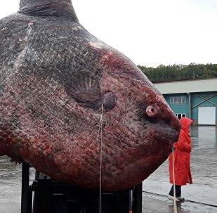 Злоўленая рыба-месяц