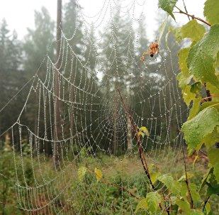 Паук плетет паутину, архивное фото