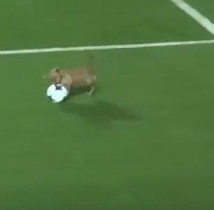 Собака на поле