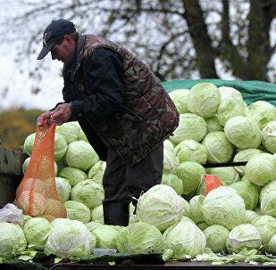 Мужчина продает капусту на сельскохозяйственной ярмарке