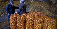Хозяйство по производству и заготовке овощей