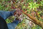 Волонтеры ПСО Ангел ищут пропавшего мальчика в Беловежской пуще