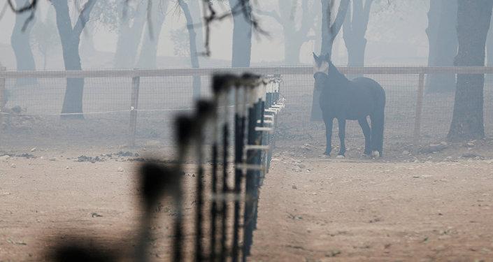 Число погибших лесных пожаров вПортугалии возросло до35