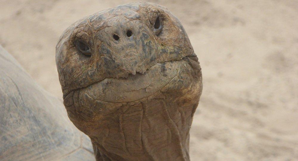Черепаха, архивное фото