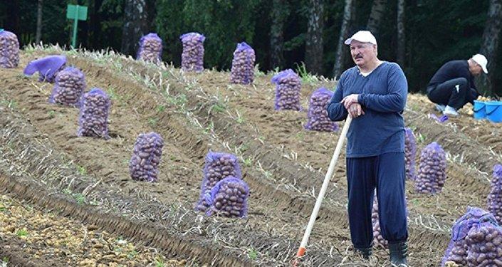 Настоящие доходы белорусов продолжают падать: на0,1% заянварь-август