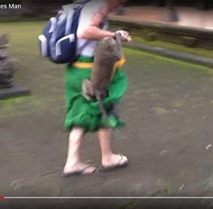 Обезьяна защищала своего детеныша и укусила мужчину в зоопарке Бали