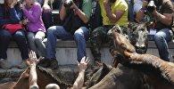 На севере Испании проходит традиционный фестиваль Rapa das Bestas