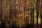 Осенний лес, архивное фото