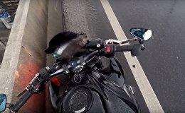 Чудесное спасение котенка от гибели под машиной