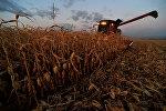 Уборка кукурузы, архивное фото