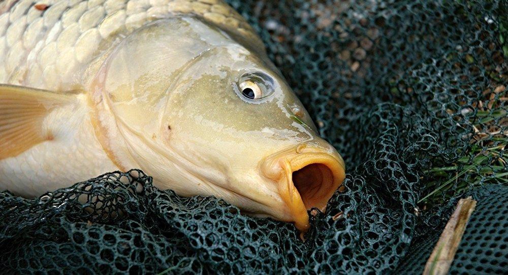 ВТамбовской области словили рыбного воришку