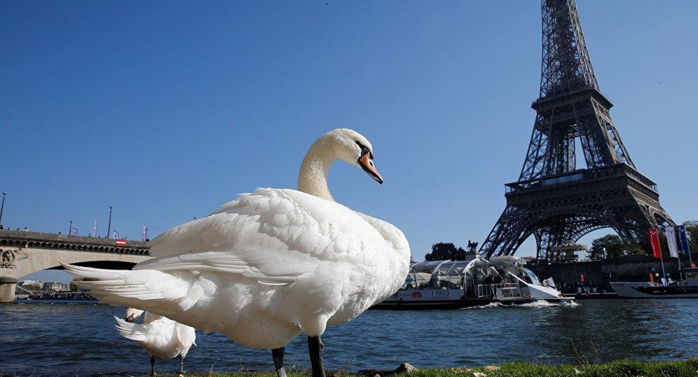НаЭйфелевой башне встолице франции возникла площадка для гольфа