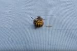 Не на жизнь, а на смерть: бой осы и пчелы напугал пользователей сети